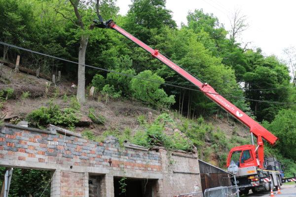 Démontage d'un arbre dans une commune