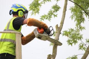 démontage d'arbre par nacelle