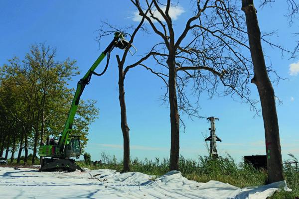 tree trimmer tenant une cime avant de le déposer dans une barge