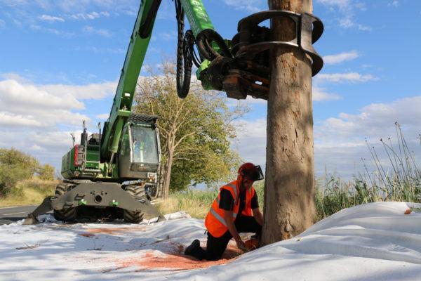 Tronçonnage du fût d'un arbre malade