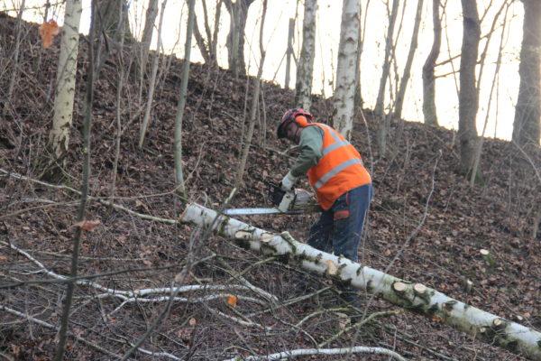 tronçonnage d'arbre abattu