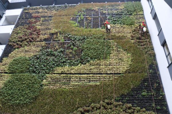 élagueurs-cordistes entretenant des plantes grimpantes exotiques