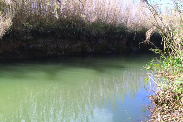 entretien de ripisylve : cour d'eau après intervention