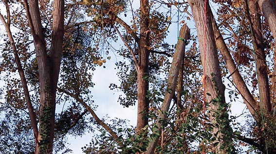 branche attachée pour descente maîtrisée