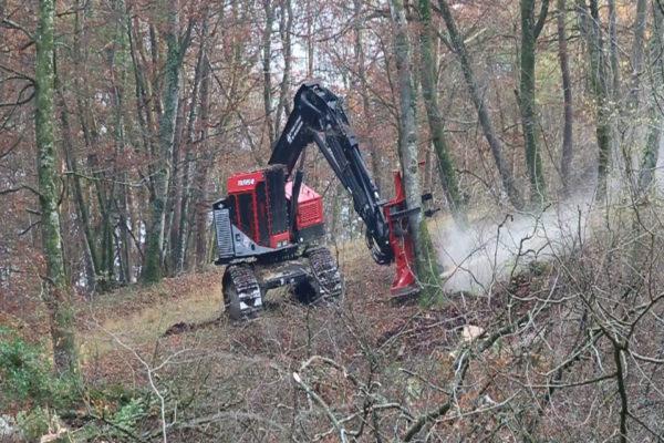 abattage des arbres au Feller Buncher