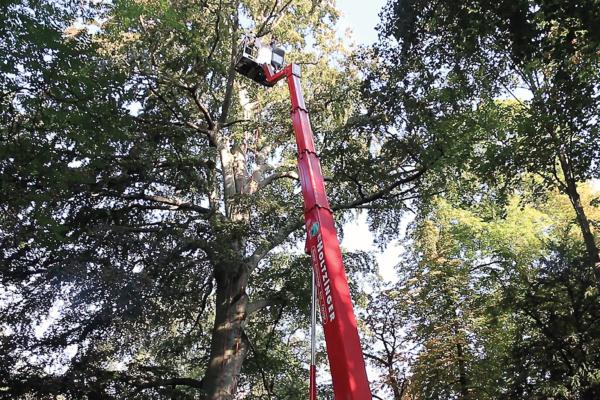 opérateur nacelle déposant élagueur en haut de l'arbre