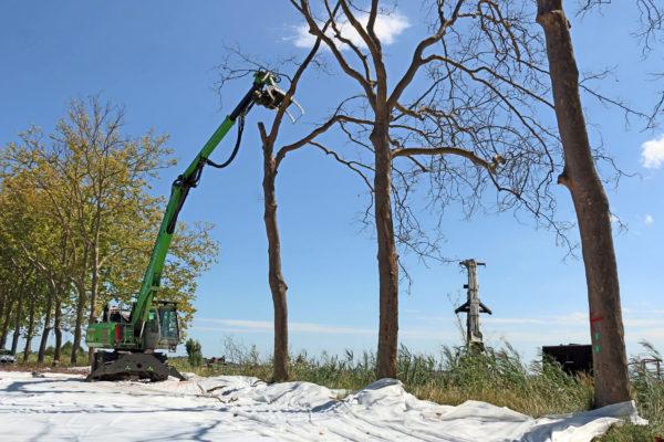 Abattage mécanisé d'arbre à la pelle sennebogen et grappin d'abattage