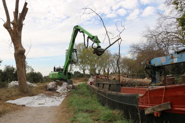 Démontage d'arbre avec pelle mécanique et tête d'abattage